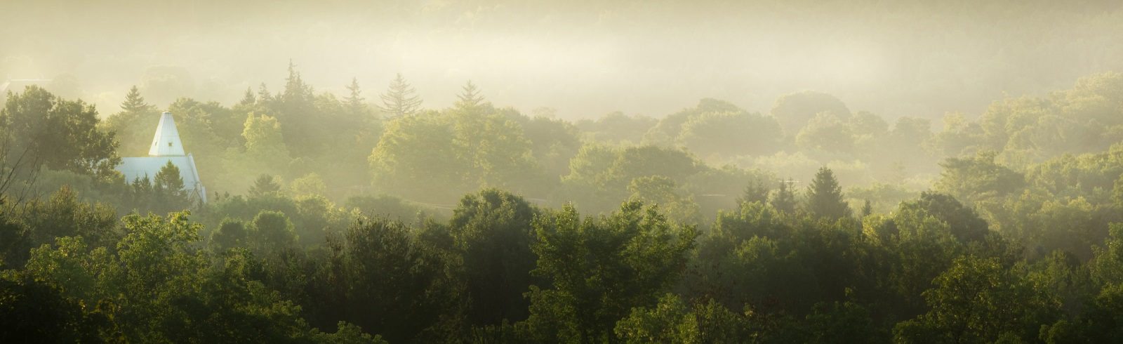 a landscape of trees with mist above them